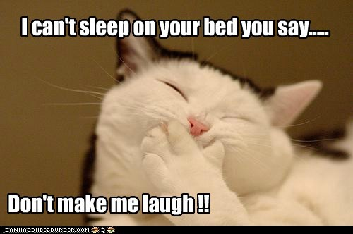 I can't sleep on your bed you say..... Don't make me laugh !!
