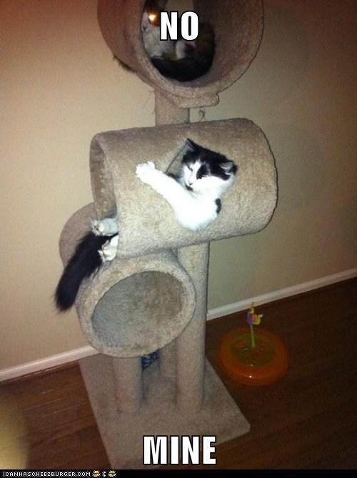 house no Cats - 7071118080