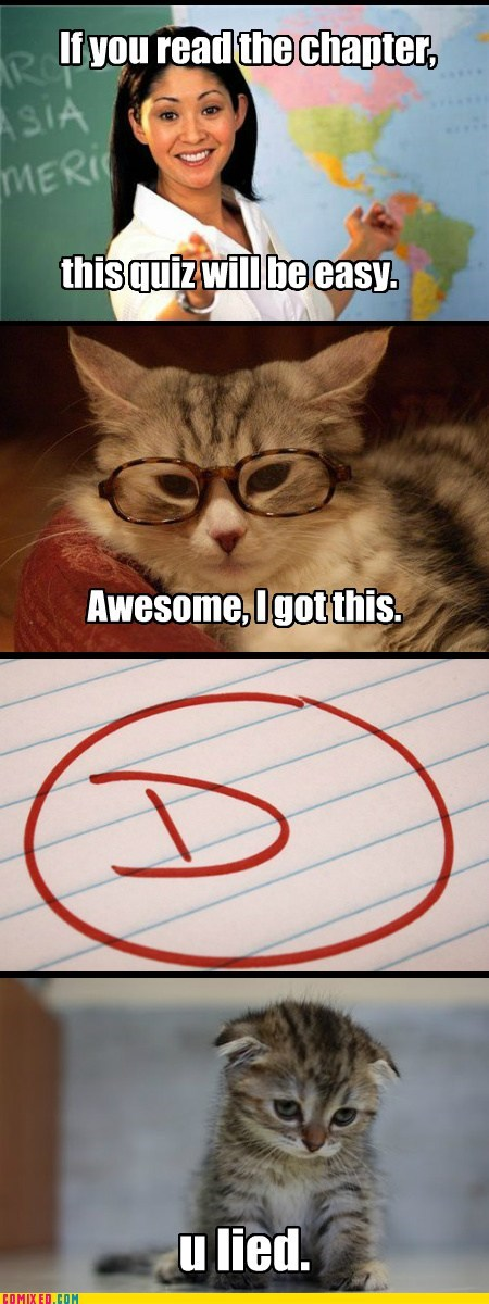 studying cat school - 7071144448