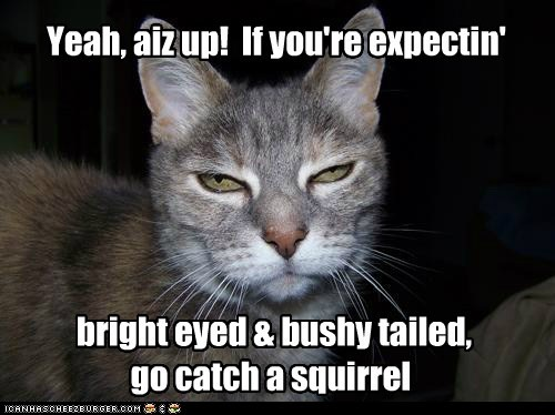 bright eyed & bushy tailed, go catch a squirrel Yeah, aiz up! If you're expectin'