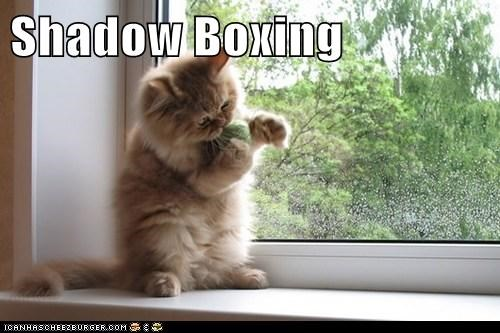 cute boxing Cats - 7071351040