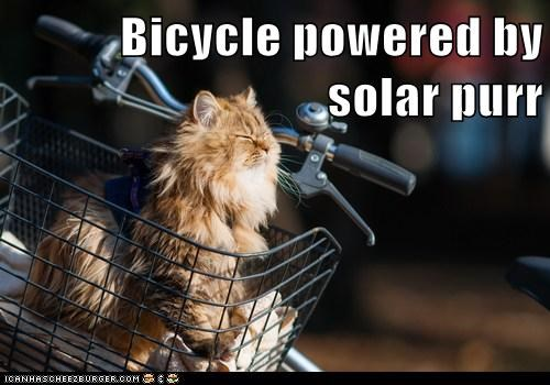 bicycle,outside,sun,Cats