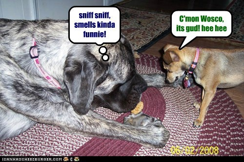 sniff sniff, smells kinda funnie! C'mon Wosco, its gud! hee hee