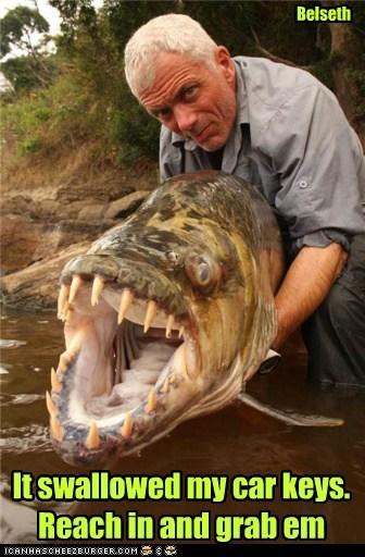 car keys swallowed teeth fish dangerous - 7071703040