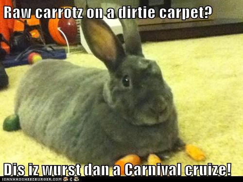 bunnies,poop,carnival cruise,overreacting,carrots,carpet