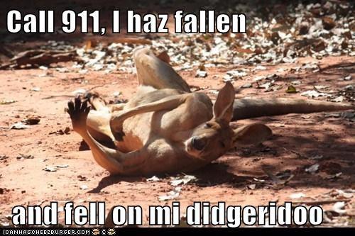 didgeridoo Australians call 911 kangaroos fallen - 7071956736