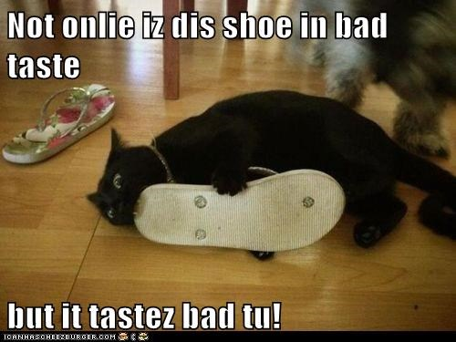 taste,shoes,bite,Cats