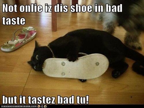 taste shoes bite Cats - 7071972608