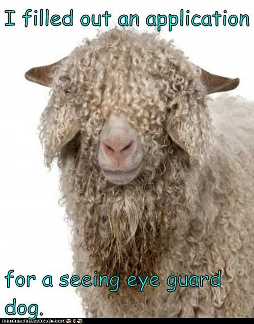 blind sheep application seeing eye wool