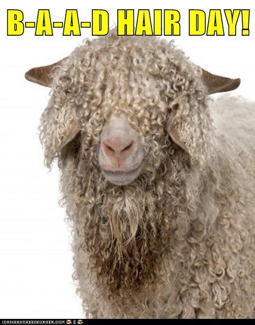 baaa puns wool sheep bad hair day