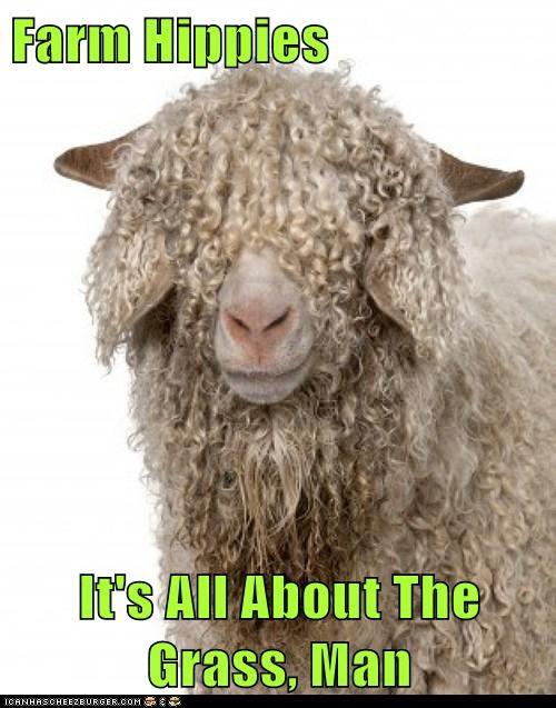 grass sheep farm - 7072417024