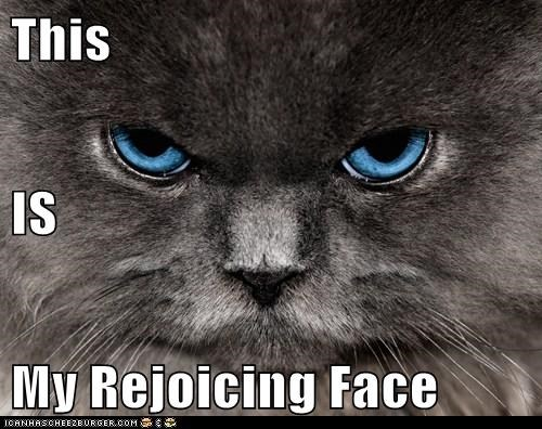 face angry Cats - 7072422400