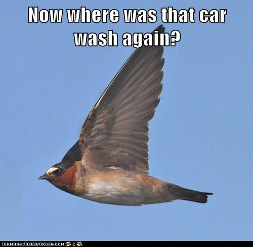 birds targets car wash pooping