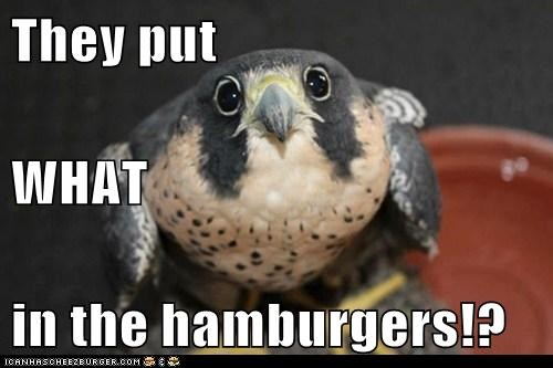 falcons,hamburgers,what,shocked