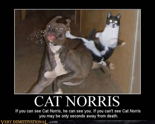 cat chuck norris dogs - 7074130176