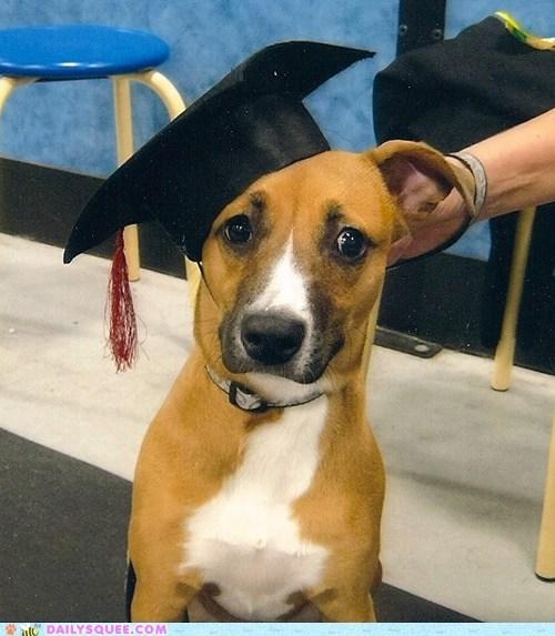 teddy bear class graduation dogs - 7074144256