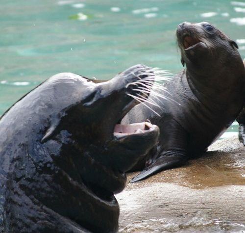 sea lions winner squee spree squee - 7074229760