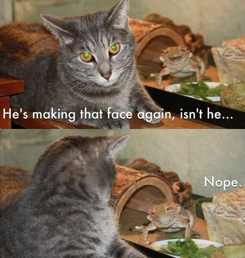 lizards face Cats - 7074257920