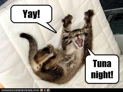 tuna kitten kitty Cats