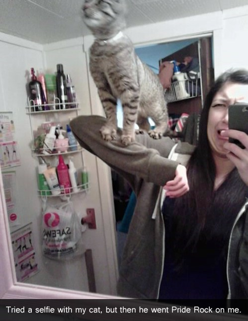 cat simba self pic - 7074341376
