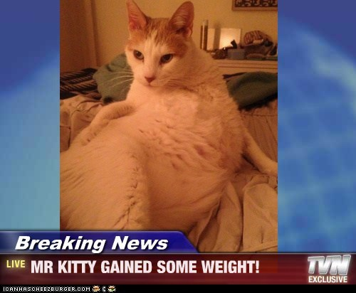 Breaking News - MR KITTY GAINED SOME WEIGHT!