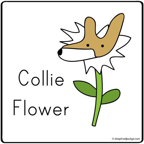 collie,cauliflower,literalism,prefix,homophone,dogs