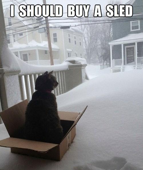 sled i should buy a boat Cats - 7074556672