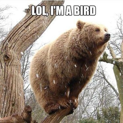 go home you're drunk climbing bears lol tree bird
