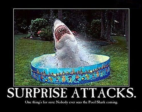 attack,pool,shark