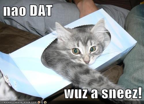 Cheezburger Image 7075187456