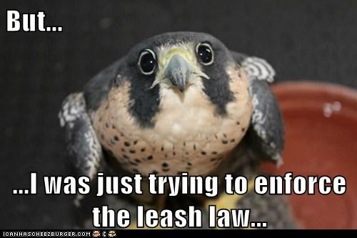 excuse dogs leash falcons - 7075550208