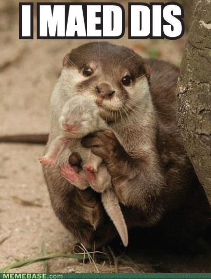 baby animals,bragging,otter,proud,made