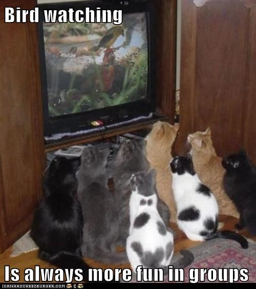 birds TV Cats