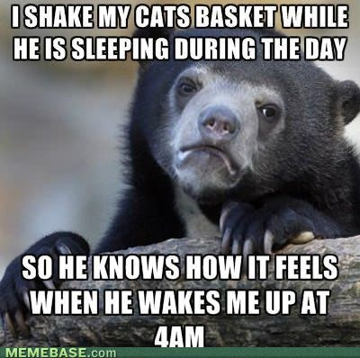 pets Confession Bear Cats - 7076190208