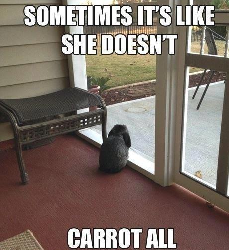 pun carrot rabbits - 7077215232