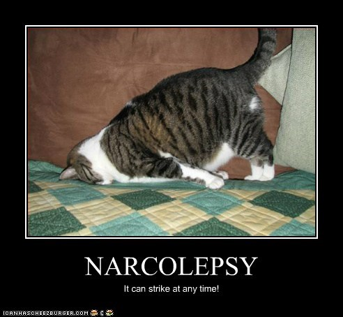 sleep narcolepsy demotivational Cats - 7077282048