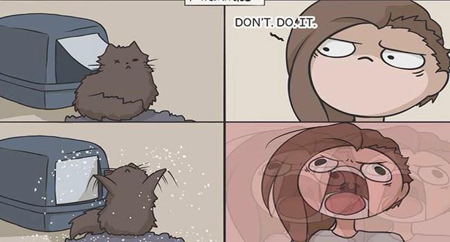 cat comics comics funny web comics - 7077381
