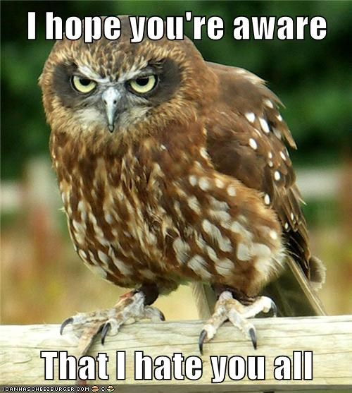 owls,hate you,angry
