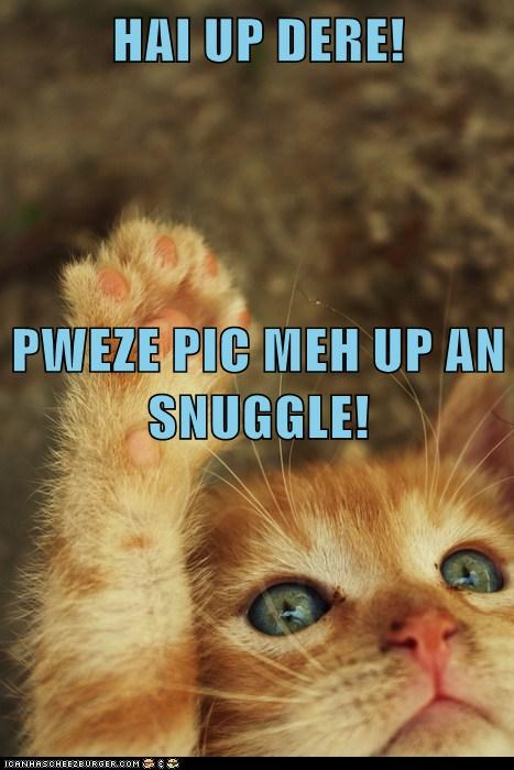HAI UP DERE! PWEZE PIC MEH UP AN SNUGGLE!