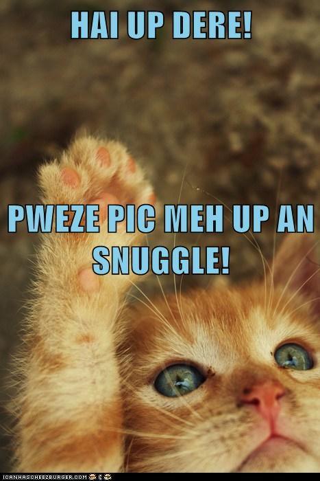 kitten cute Cats - 7077601792