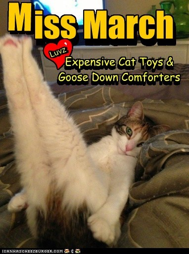 iss March Expensive Cat Toys & Goose Down Comforters Luvz Y Luvz Expensive Cat Toys & Goose Down Comforters iss March n n M M ,