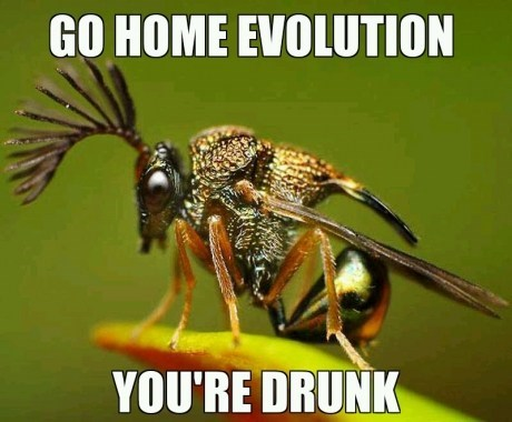 go home you're drunk,insects,evolution