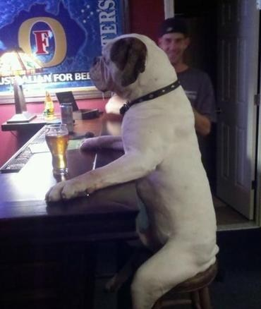 alcohol crunk critters fosters dogs - 7077654272