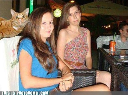 cat cat photobomb kitty - 7077673984