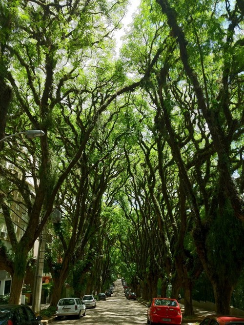 trees road landscape tunnel - 7077684736