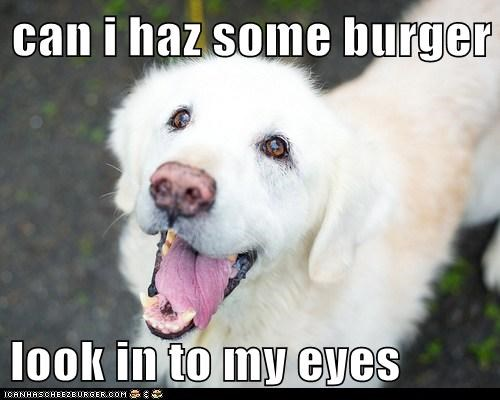 Cheezburger Image 7077693440