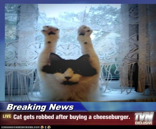 Breaking News - Cat gets robbed after buying a cheeseburger.