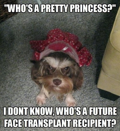 dresses dogs animals in clothes - 7077855488