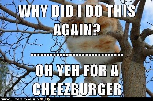 Cheezburger Image 7077942528