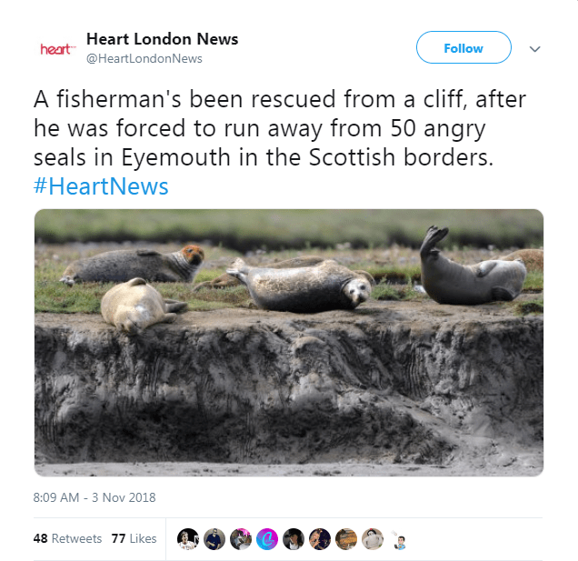 seals save cliff angry rescue - 7078661